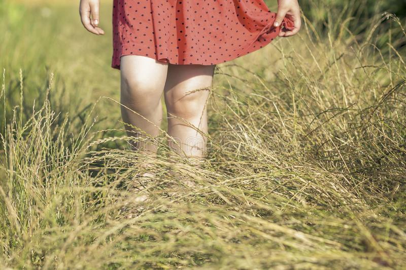 Child in red dress walking in tall high grass at field royalty free stock images
