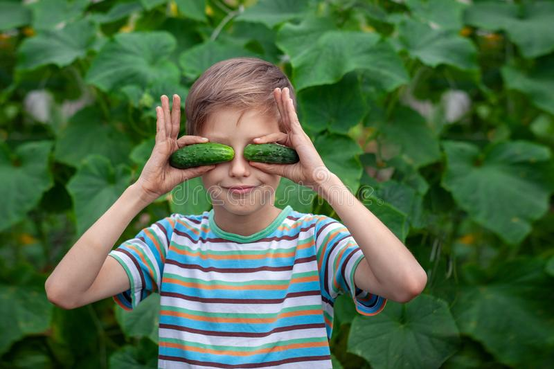 Child with ripe red tomatoes in the greenhouse. Concept healthy eating vegetables for kids stock photography