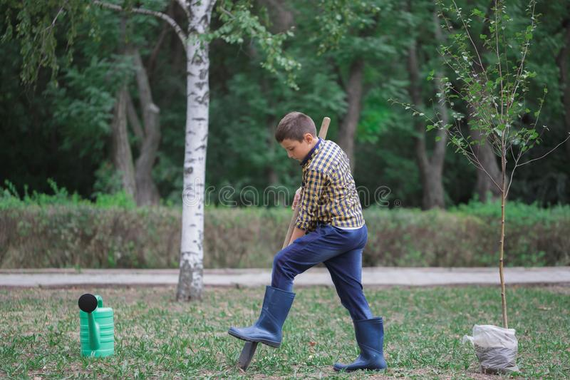 Little boy on the field with a big shovel looking at the camera planting a tree. Faily autumn day. stock images