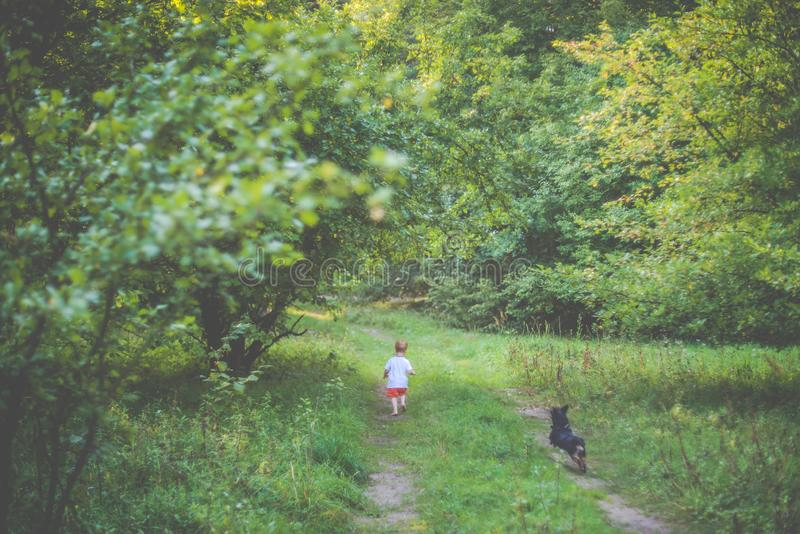 Child running with a dog. In forest nature stock photo