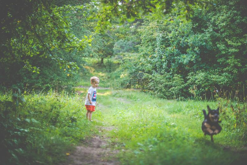 Child running with a dog. In forest nature royalty free stock photo