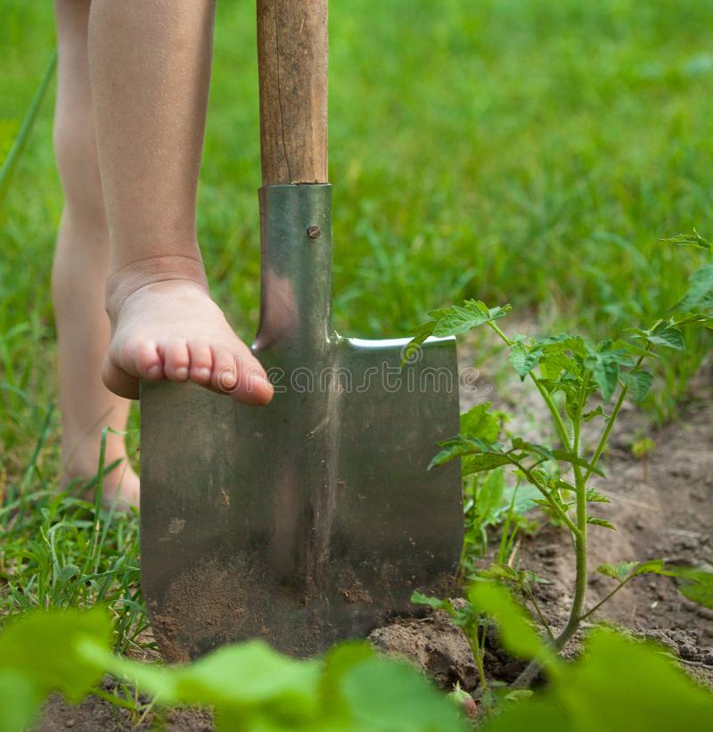 Child`s bare foot on the metal spade royalty free stock image