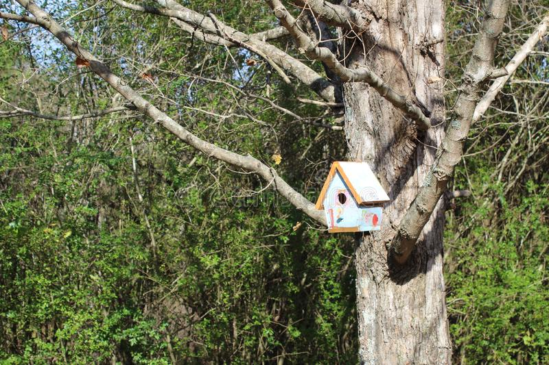 Child`s bird house in tree with no leaves. stock photography