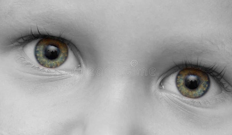 The child's eye royalty free stock photo