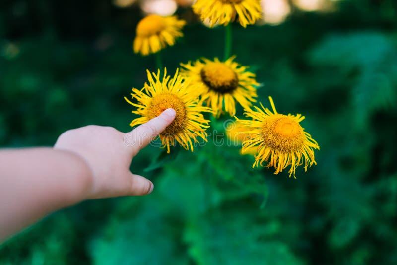 Child& x27; s-Hand, die eine Blume berührt lizenzfreie stockfotografie