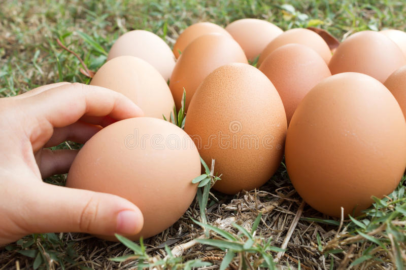 Child's hand hold a fresh eggs on grass background. Select focus on an egg in a central of frame stock photo