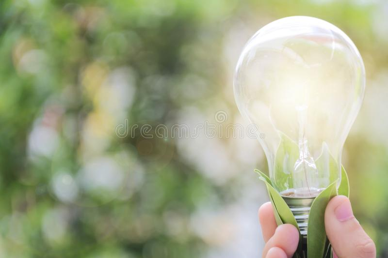 Child`s hand hold light bulb,Energy for a sustainable future. royalty free stock photos