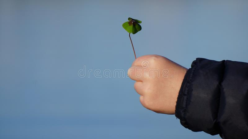 Child`s hand holding a Four Leaf Clover against a Blue Sky royalty free stock photography