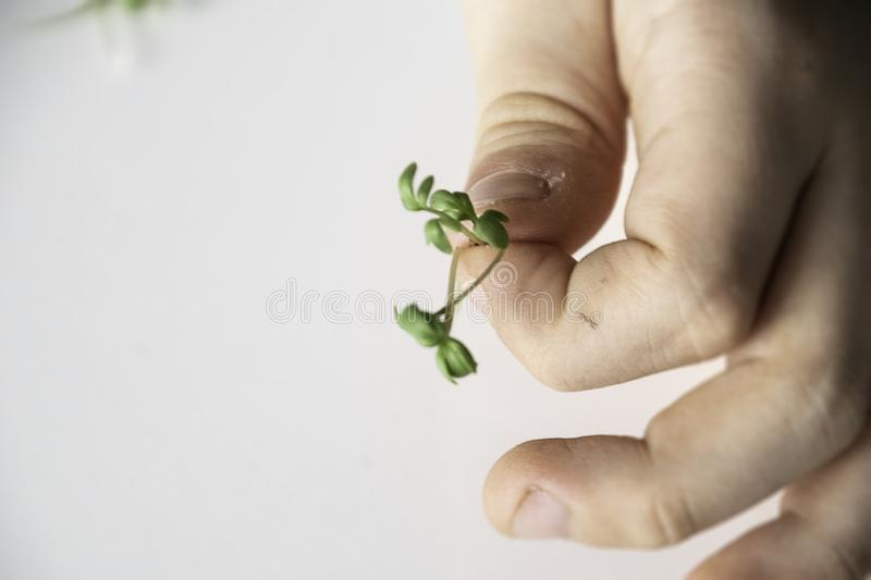 A child`s hand is holding a green scarlet before Easter royalty free stock photography