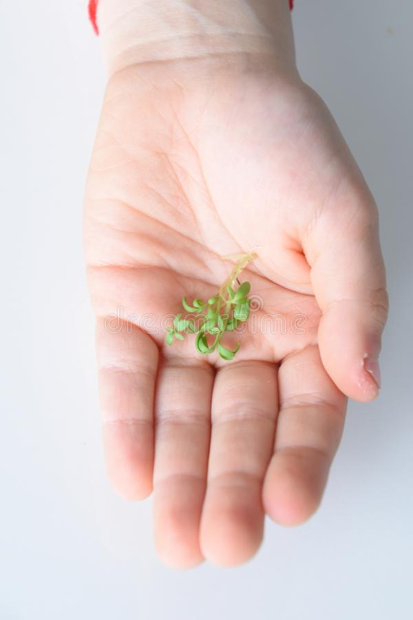 A child`s hand is holding a green scarlet before Easter royalty free stock images