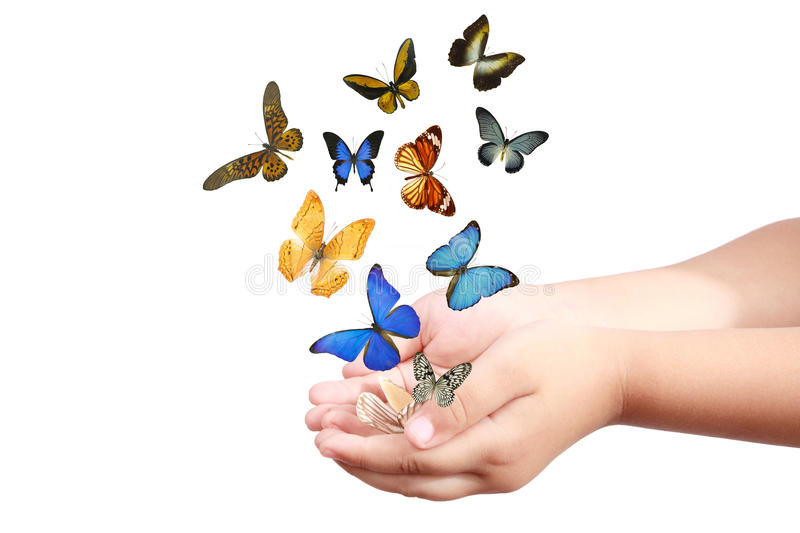 Child's hand releasing butterflies. Small hand and colorful butterflies isolated on white stock photos