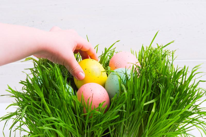 Child`s hand take Easter decorated egg from grass. Easter hunt concept with copy space royalty free stock image