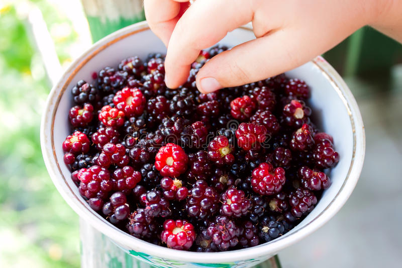 Child`s hand takes blackberries lying in plate royalty free stock images