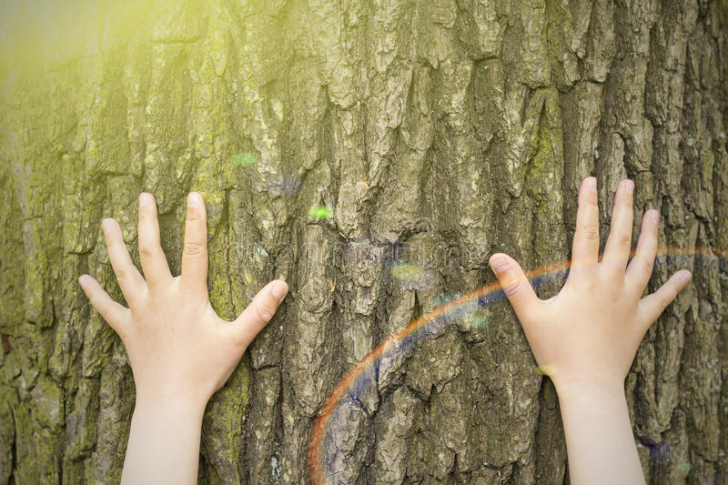 Child`s hands hugging a tree. royalty free stock images
