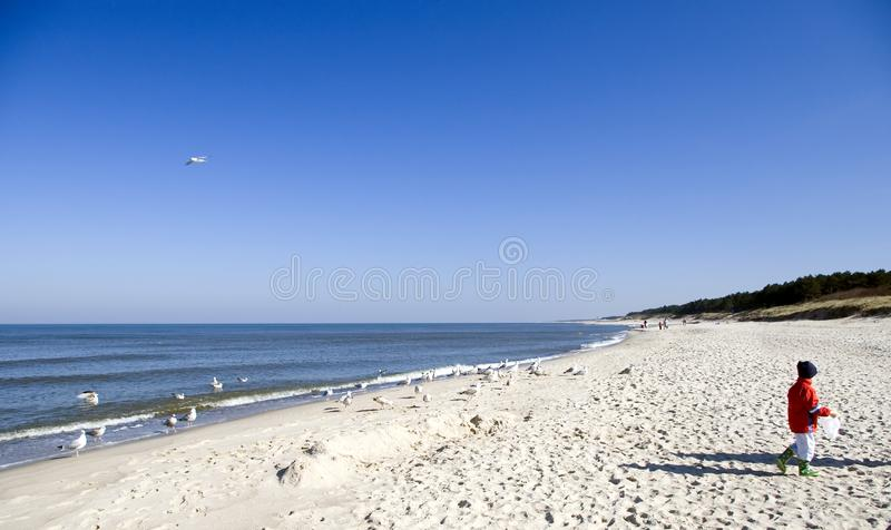 Child and sea gulls. stock photos
