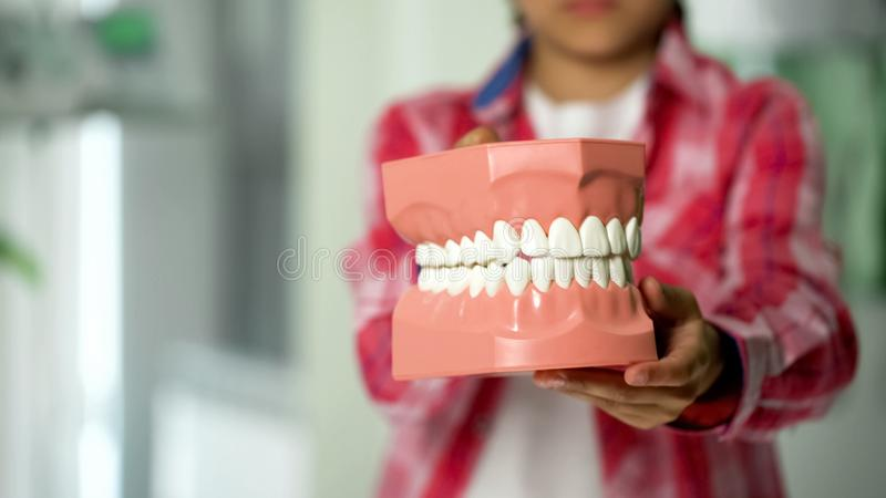 Child showing jaw model, dental services for children, prevention of caries royalty free stock photos