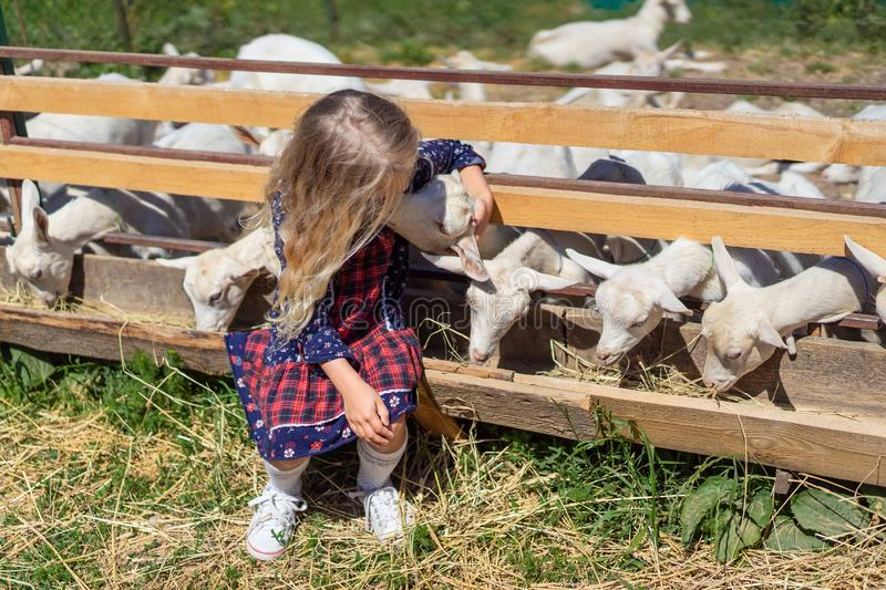 child sitting on fence and kissing goat royalty free stock image