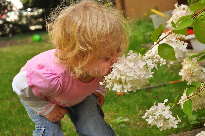 Child smelling a white flower royalty free stock photography