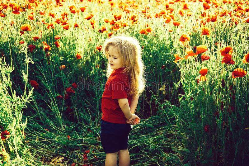 Child or smiling little boy with long blonde hair in red shirt in flower field of poppy with green stem on natural stock photos