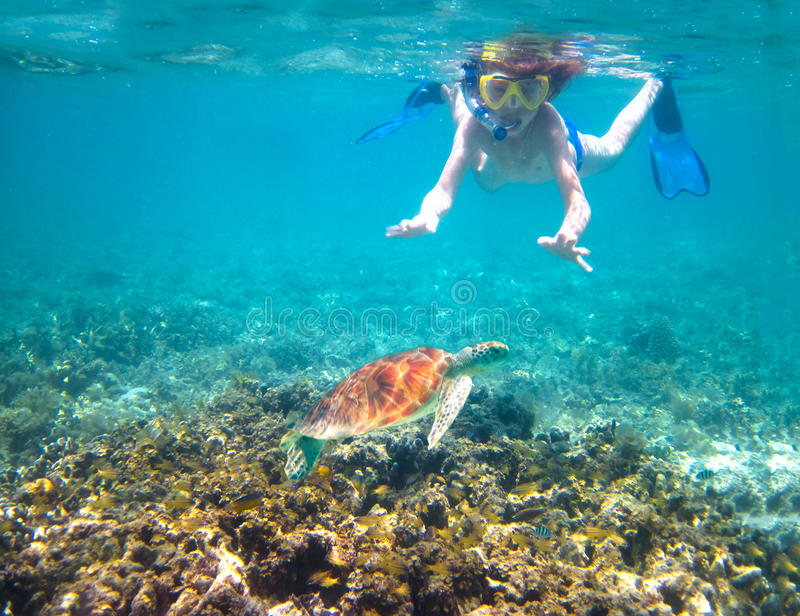 Child snorkeling in a tropical sea next to a turtle royalty free stock photos