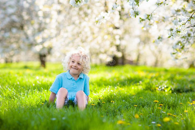 Child in spring park with flowers. Cute little boy playing in spring park with cherry tree flowers. Child on Easter egg hunt in blooming garden. Kids play royalty free stock photos