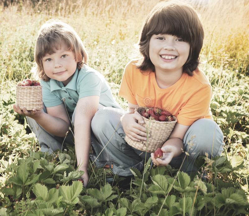 Child with strawberries sunny garden with a summer day stock photos