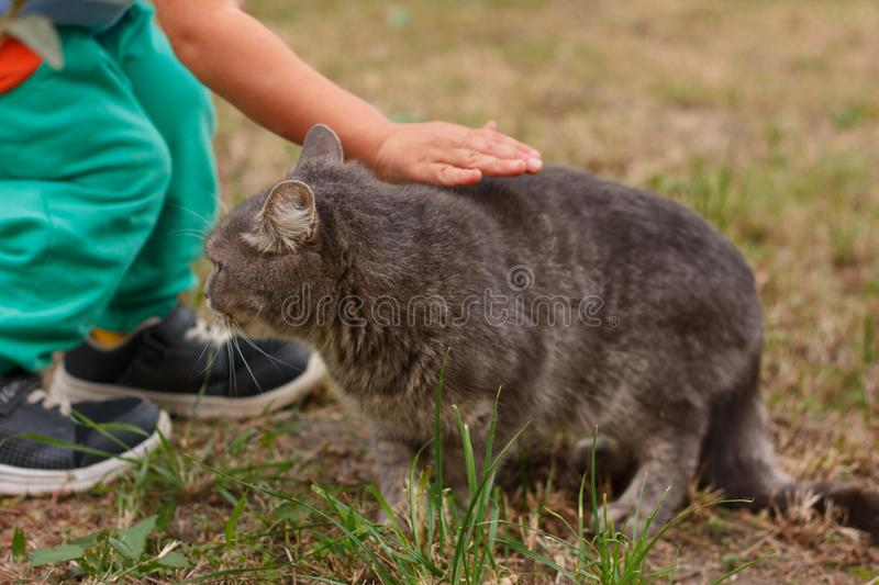The child strokes of his favorite gray cat stock image