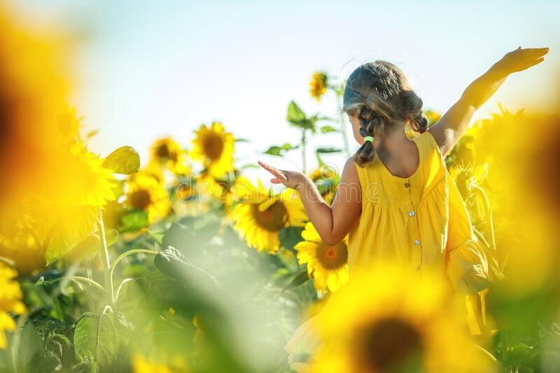 Child in a sunflower field. High quality photo stock images