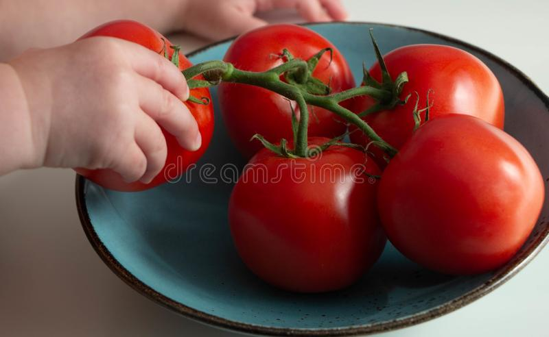 A child takes one tomato from a branch lying on a turquoise plate stock photos