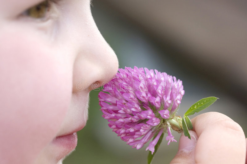 A child with trefoil. A little child is smelling violet trefoil royalty free stock photography