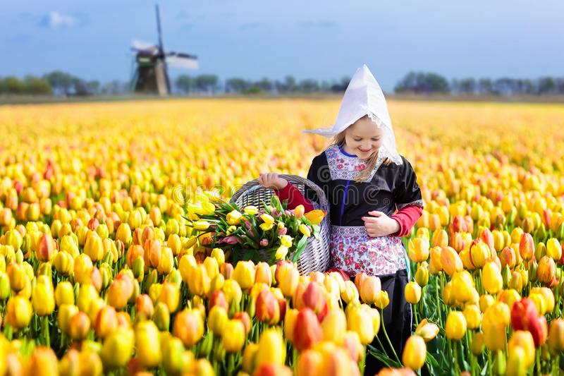 Child in tulip flower field. Windmill in Holland. Child in tulip flower field with windmill in Holland. Little Dutch girl in traditional national costume, dress royalty free stock image