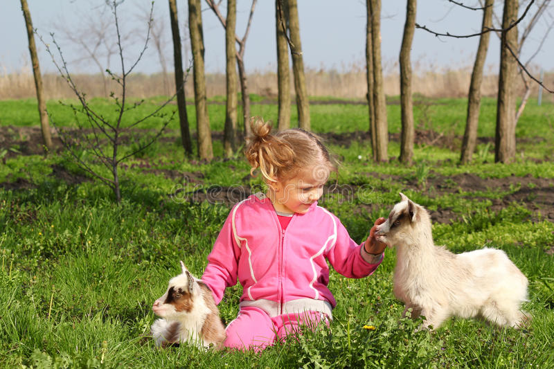 Child and two little goats stock photos