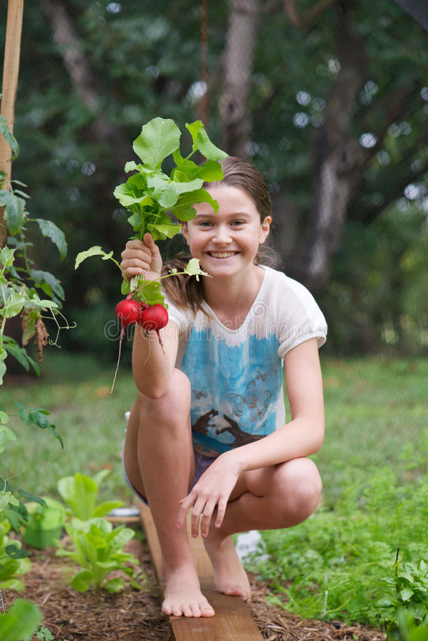 Child in veggie patch. Young girl holding freshly picked radish in a veggie patch protected from birds by a net stock images