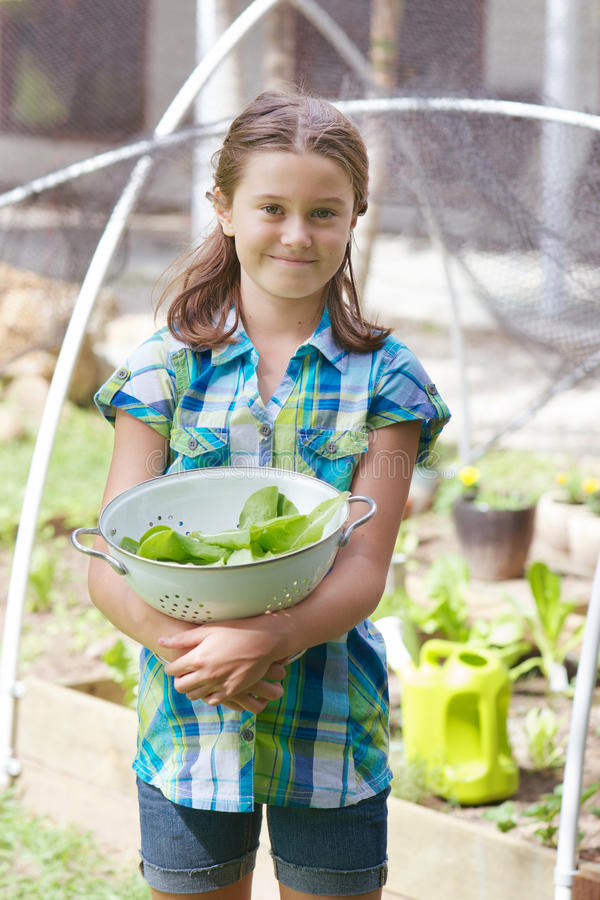 Child in veggie patch. Young girl holding a white colander with freshly picked lettuce in a veggie patch protected from birds by a net royalty free stock photo