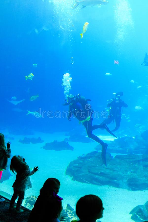 Child watches Scuba diver in tank with various sea creatures at the georgia aquarium USA. Giant fish in aquarium fish tank underwater with scuba diver in USA stock photos