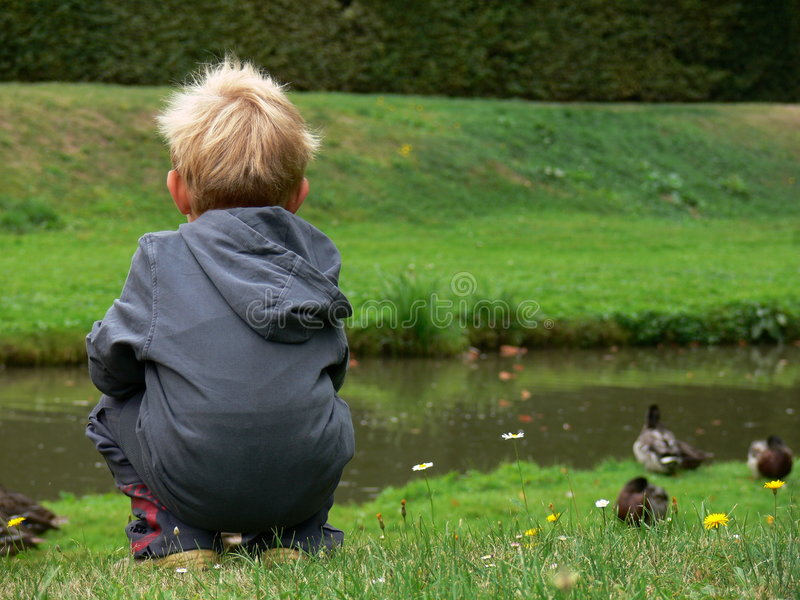 Download Child Watching On The Duck Stock Photos - Image: 3132483