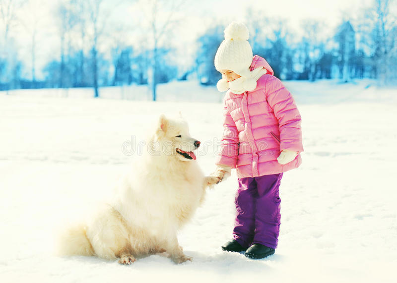 Child and white Samoyed dog gives paw playing winter day royalty free stock images