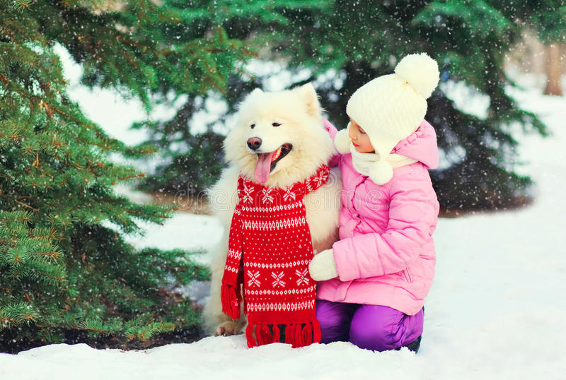 Child and white Samoyed dog in red scarf near christmas tree winter royalty free stock photos