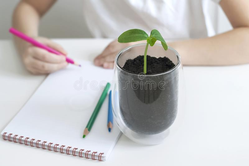 A child writes in an empty notebook. Kid looking at plant seedling. Biology class. ucumber leaves. Ecology concept stock photos