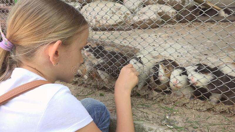 Child in Zoo Park, Girl Feeding Guinea Pigs, Kids Love Nursing Animals Pets Care.  stock photos