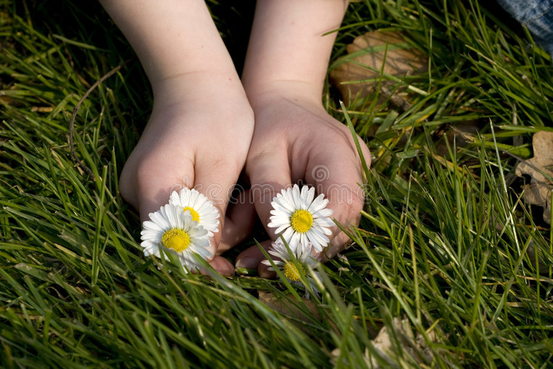 Childhands with flowers. Child-hands with flowers for mothersday stock image