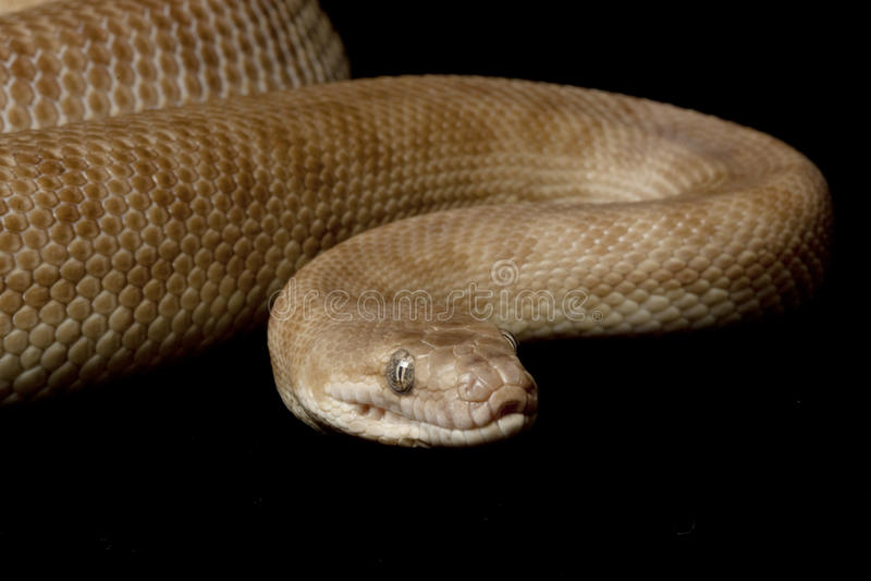 Children��s python stock photos