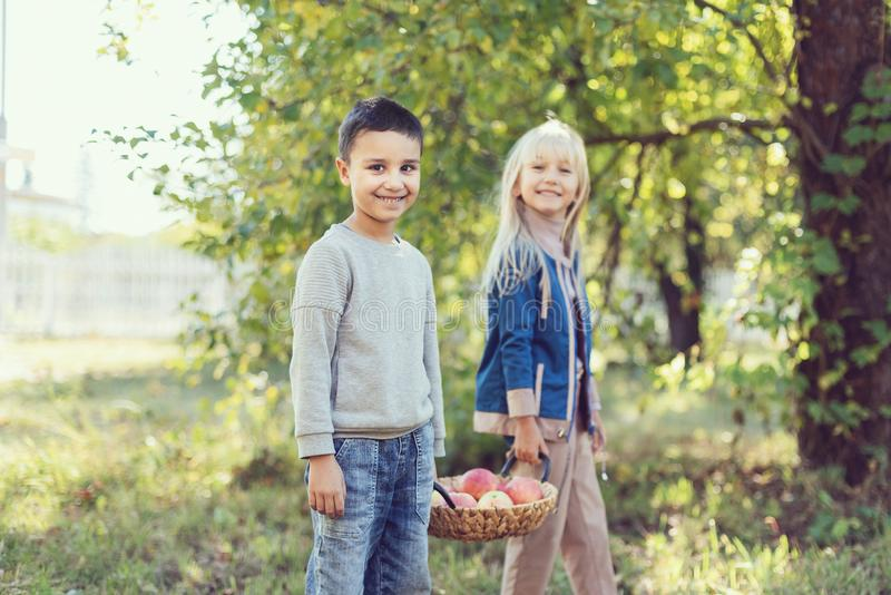 Children with Apple in the Apple Orchard. Child Eating Organic Apple in the Orchard. Harvest Concept. Garden, Toddler eating. Fruits at fall harvest. Apple stock images