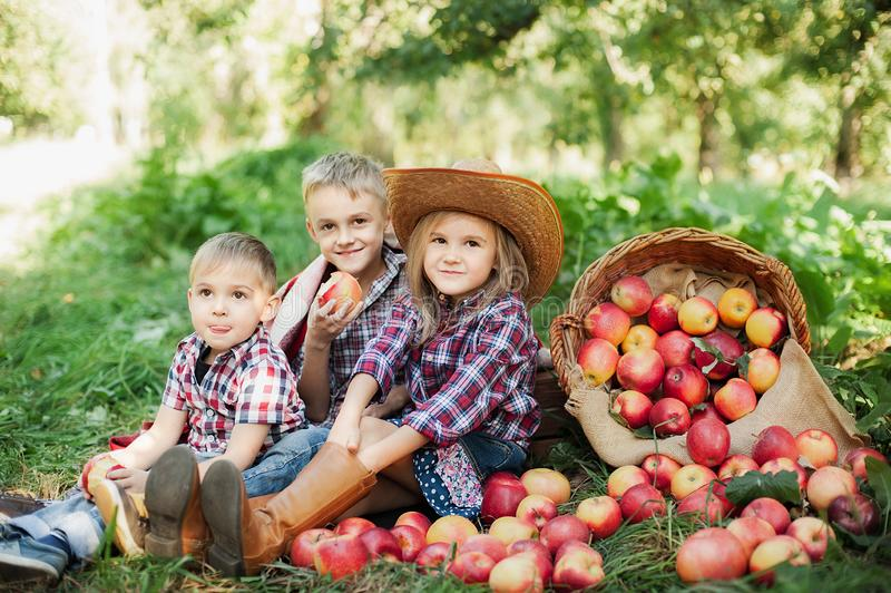 Children with Apple in the Apple Orchard. Child Eating Organic Apple in the Orchard. Harvest Concept. Garden, Toddler eating fruit stock photos