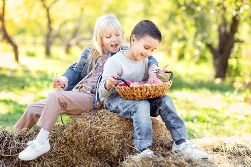 Children with Apple in Orchard. Harvest Concept. Children with Apple in Apple Orchard. Eating Organic Apple. Harvest Concept. Garden, Boy and girl eating fruits royalty free stock images