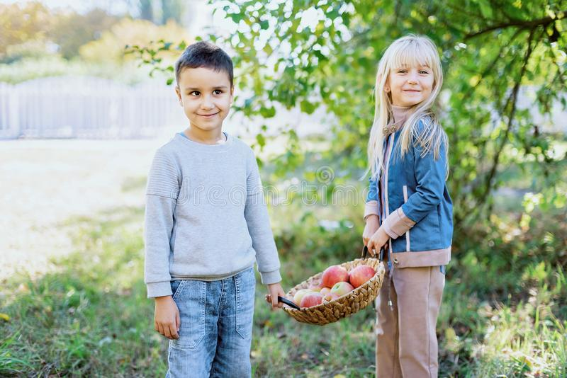 Children with Apple in Orchard. Harvest Concept. Children with Apple in Apple Orchard. Eating Organic Apple. Harvest Concept. Garden, Boy and girl eating fruits stock image