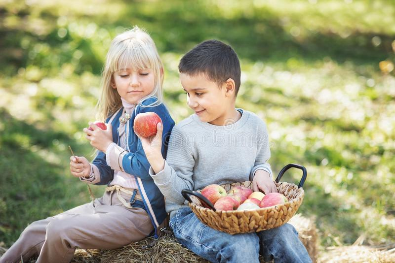 Children with Apple in Orchard. Harvest Concept. Children with Apple in Apple Orchard. Eating Organic Apple. Harvest Concept. Garden, Boy and girl eating fruits stock images