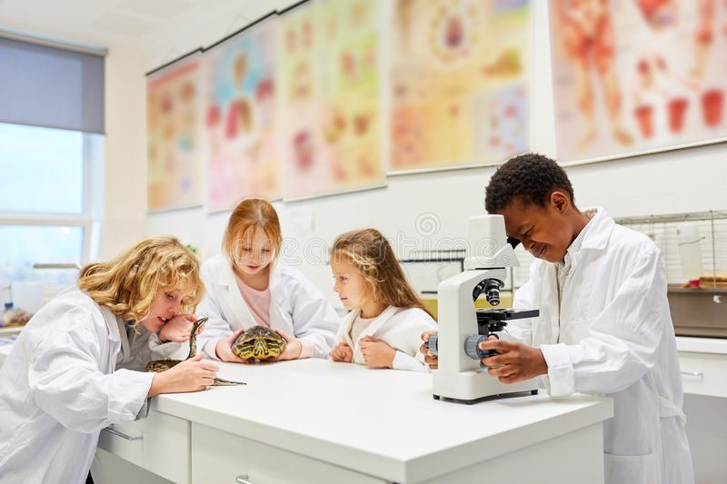 Children of biology class in the laboratory royalty free stock photos