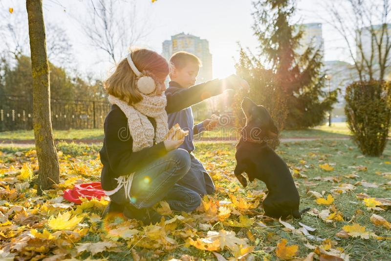 Children boy and girl playing with dachshund dog in a sunny autumn park stock images