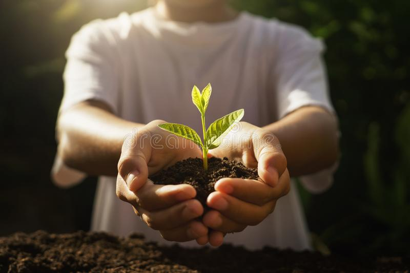Children caring young plant. hand holding small tree in morning light. Sunrise, farm, energy, save, world, care, helping, earth, kid, land, new, dirt stock photo